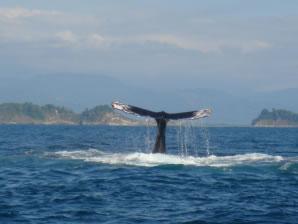 dolphin_adventures_view2